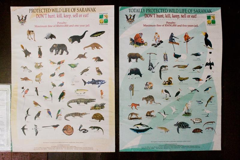 Zvířecí druhy na Borneu
